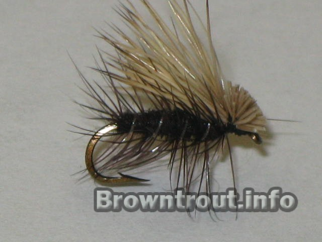 The Elk Hair Caddis dry fly. This is a versatile dry fly, likely to be in most fly boxes all across the US.
