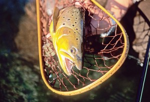 a good net for brown trout