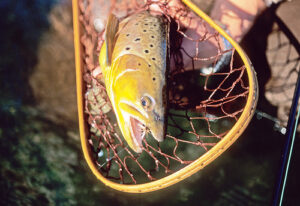 a good net for brown trout, Catch and Release for trout, how to catch and release trout, how to properly catch and release trout