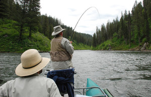 fighting a trout in a boat with a bent fishing rod.