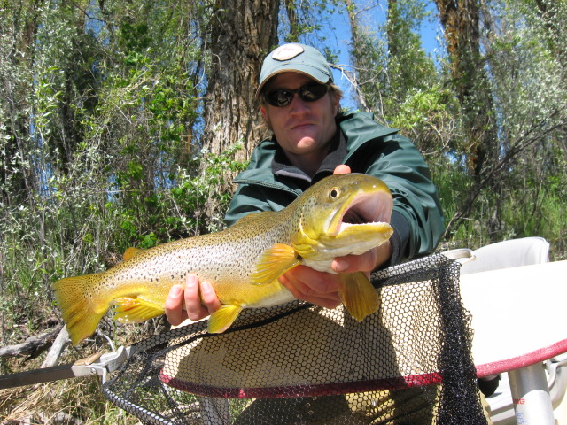 Brown Trout on the snake river in Idaho