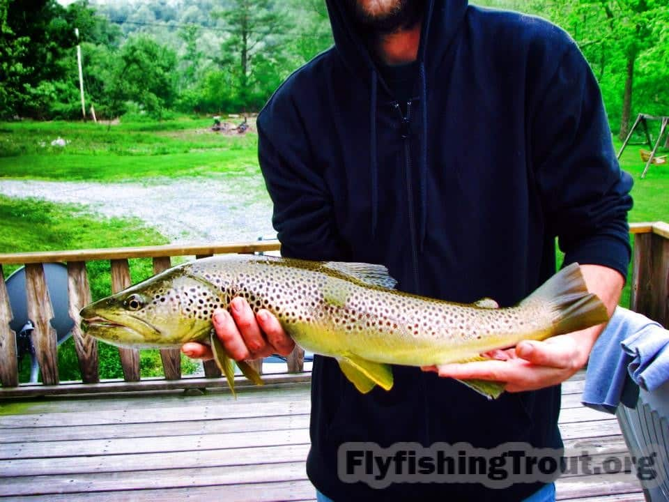 Andy LaMotte Brown Trout 2