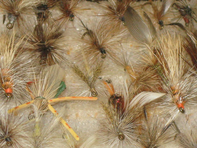 An assortment of Dry flies in a fly box for fly fishing.