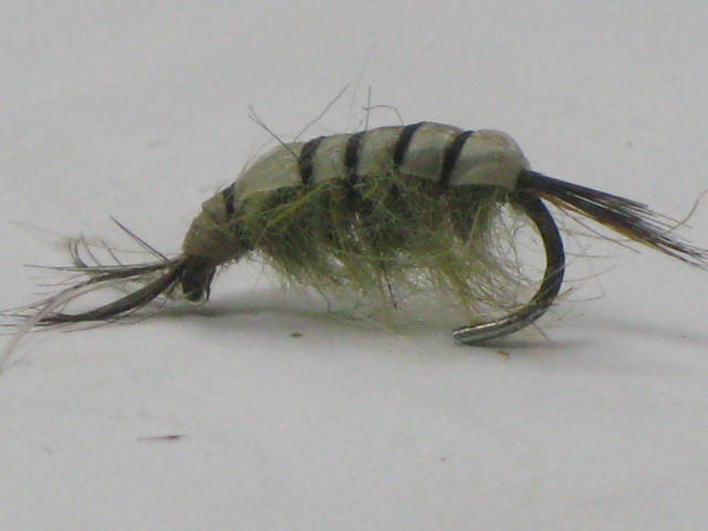 Another Great scud pattern for fly fishing trout.