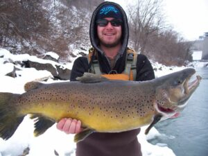 Really Big Brown Trout