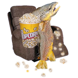 Fat Brown trout Eating popcorn