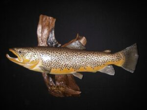 Brown trout replica mount.  How to measure properly for your taxidermist.