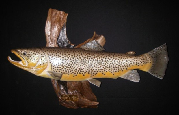 Replica fish mounts taxidermy how to measure your trout for How to taxidermy a fish