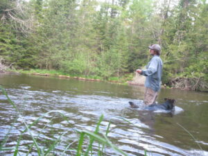 Fly fishing for brown trout