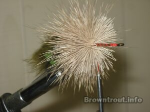 Packing deer hair on the mouse fly