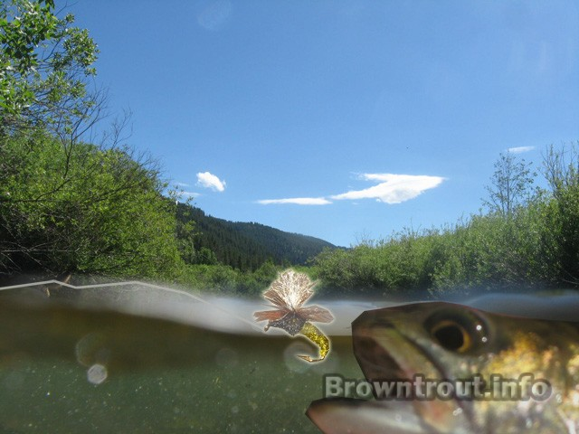 Emerger Flies and patterns for fly fishing