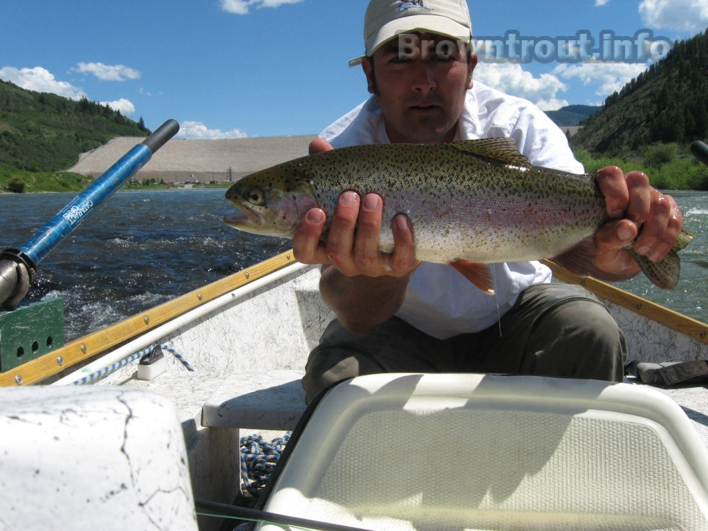 Triut fishing tips for the rainbow and other trout species.