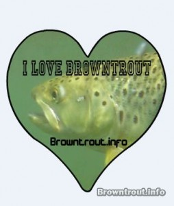 I love Brown Trout Sticker