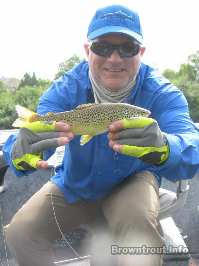 Trout with antennae for telemetry caught in Idaho