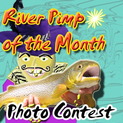 River pimp of the month trout photo contest