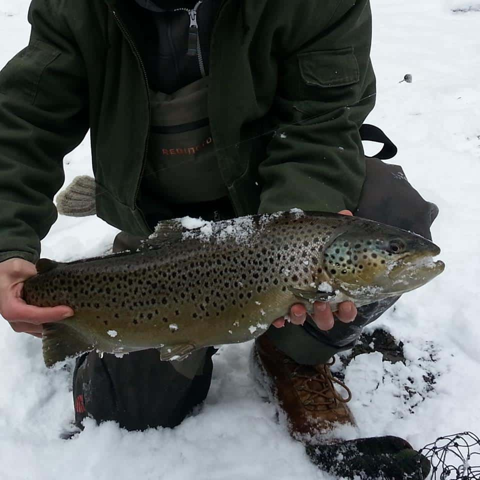 Been Reel's Nice New York Brown Trout