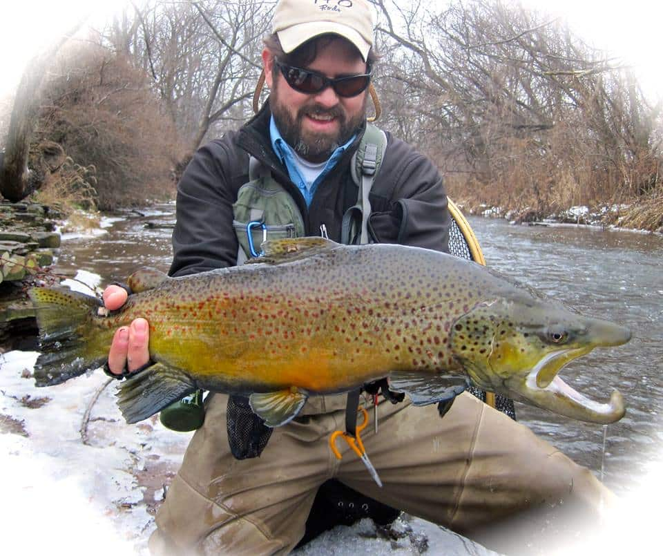Patrick Campbell With a Major Stud Brown