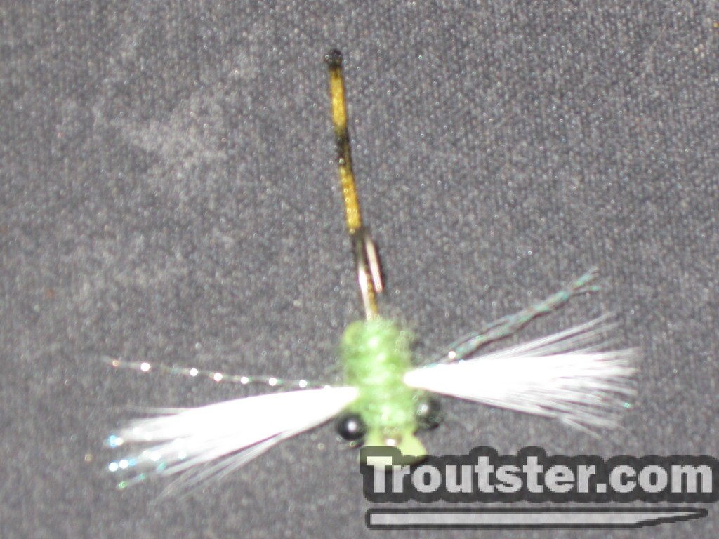 The underside of the damsel trout fly.