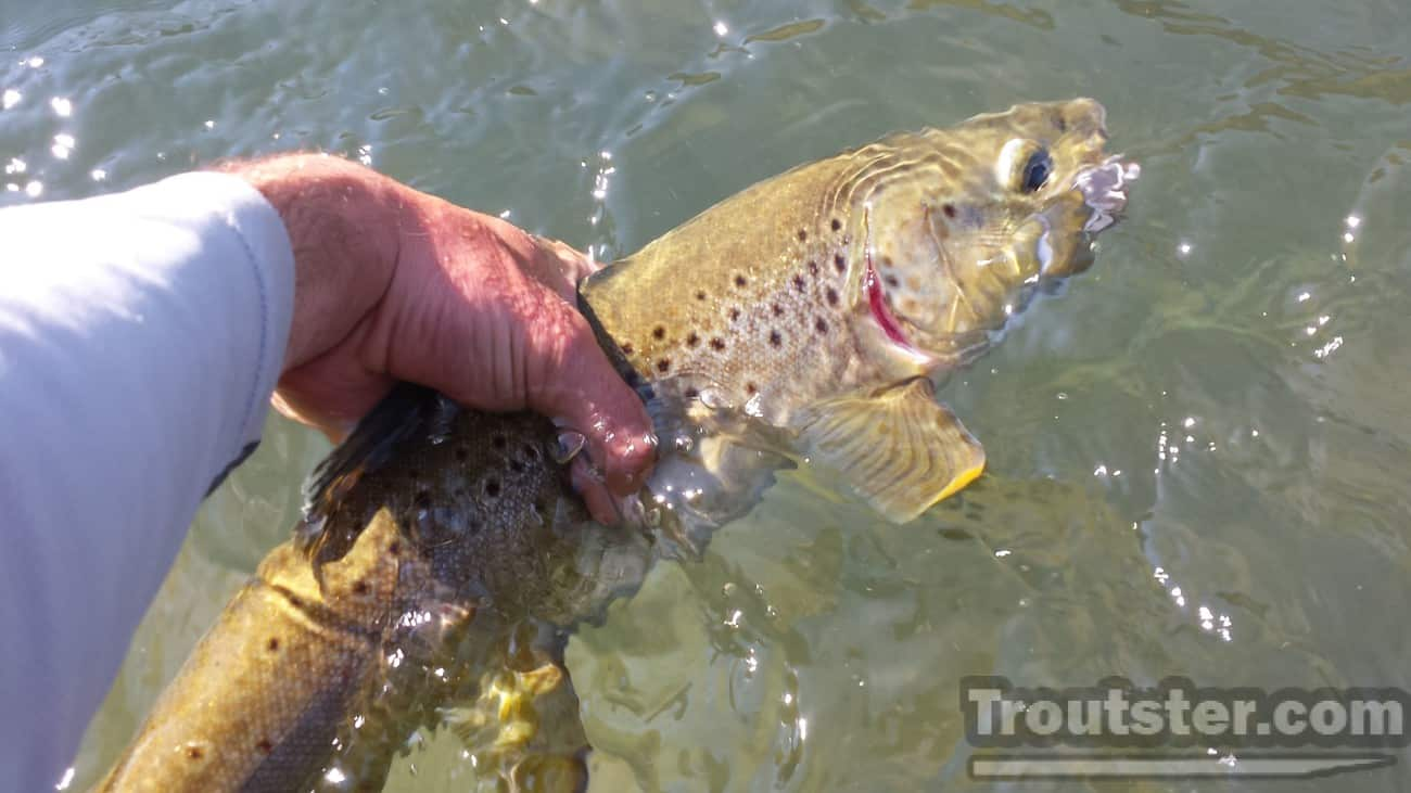 Tips for landing your trout