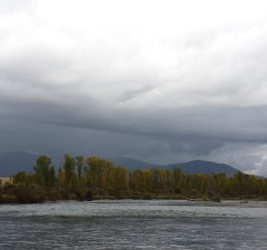 Tghe south fork of the Snake river on a rainy day and bald eagle flying overhead.