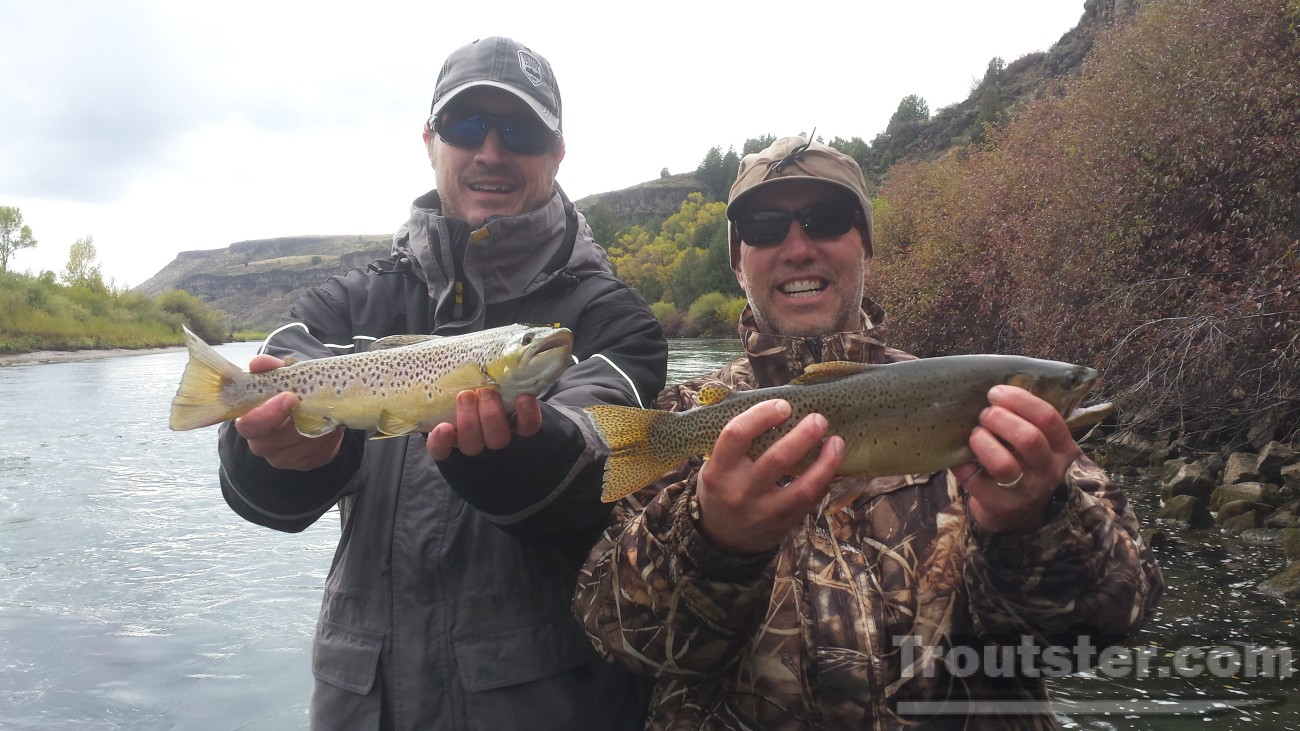 A cutthroat and brown trout caught simultaneously