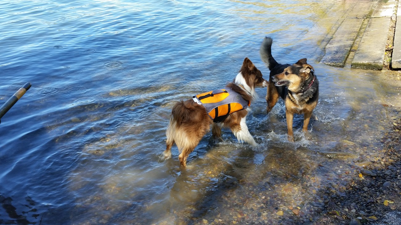 Life vests for dogs, a wise investment.