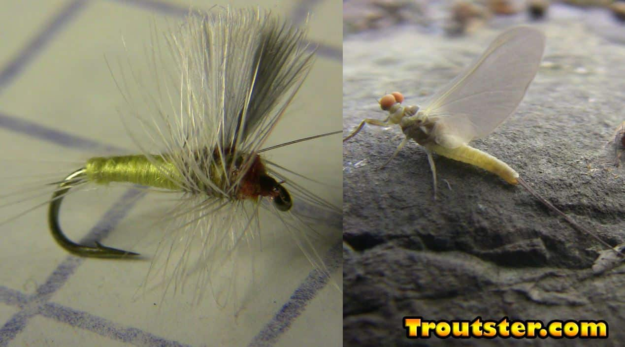 A mayfly and a small dry fly imitation to match it