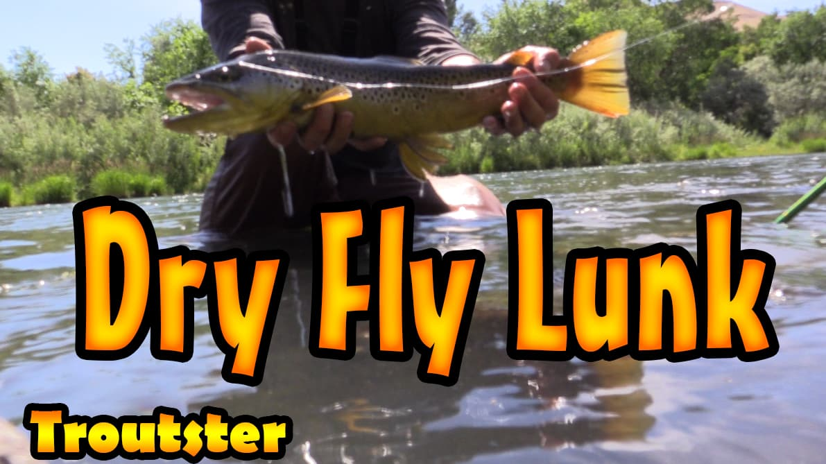 Big brown trout caught fly fishing