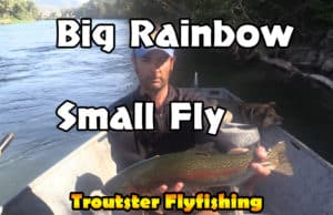 Big rainbow on a small dry fly