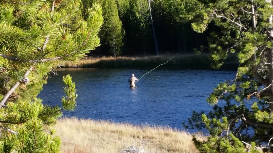 Fly fishing the Madison river in Yellowstone