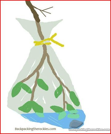 How to make a transpiration bag to procure water in survival