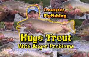Huge cutthroat trout and cutbows in the Western USA