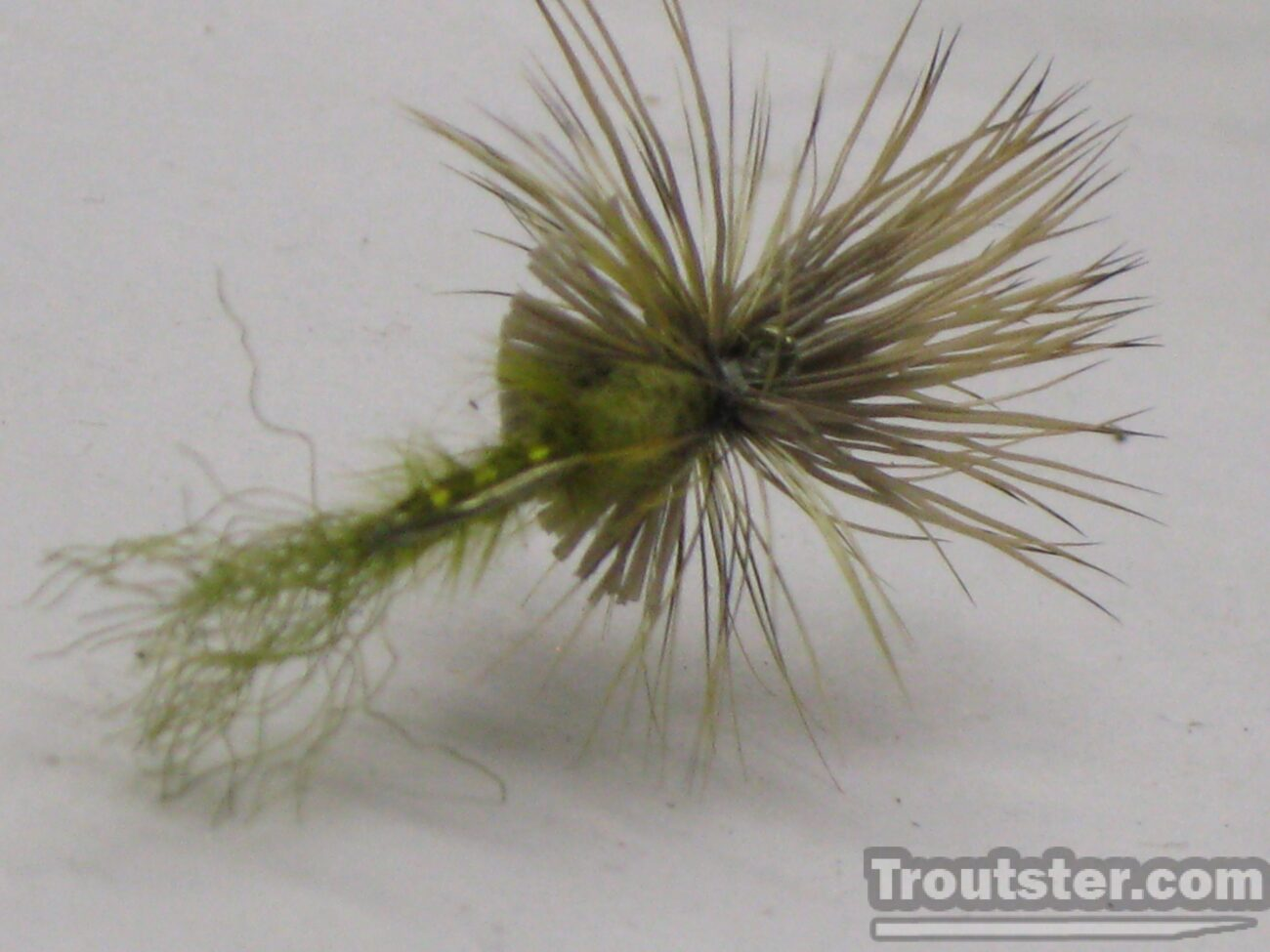 Green drake cripple pattern image the the bottom of fly