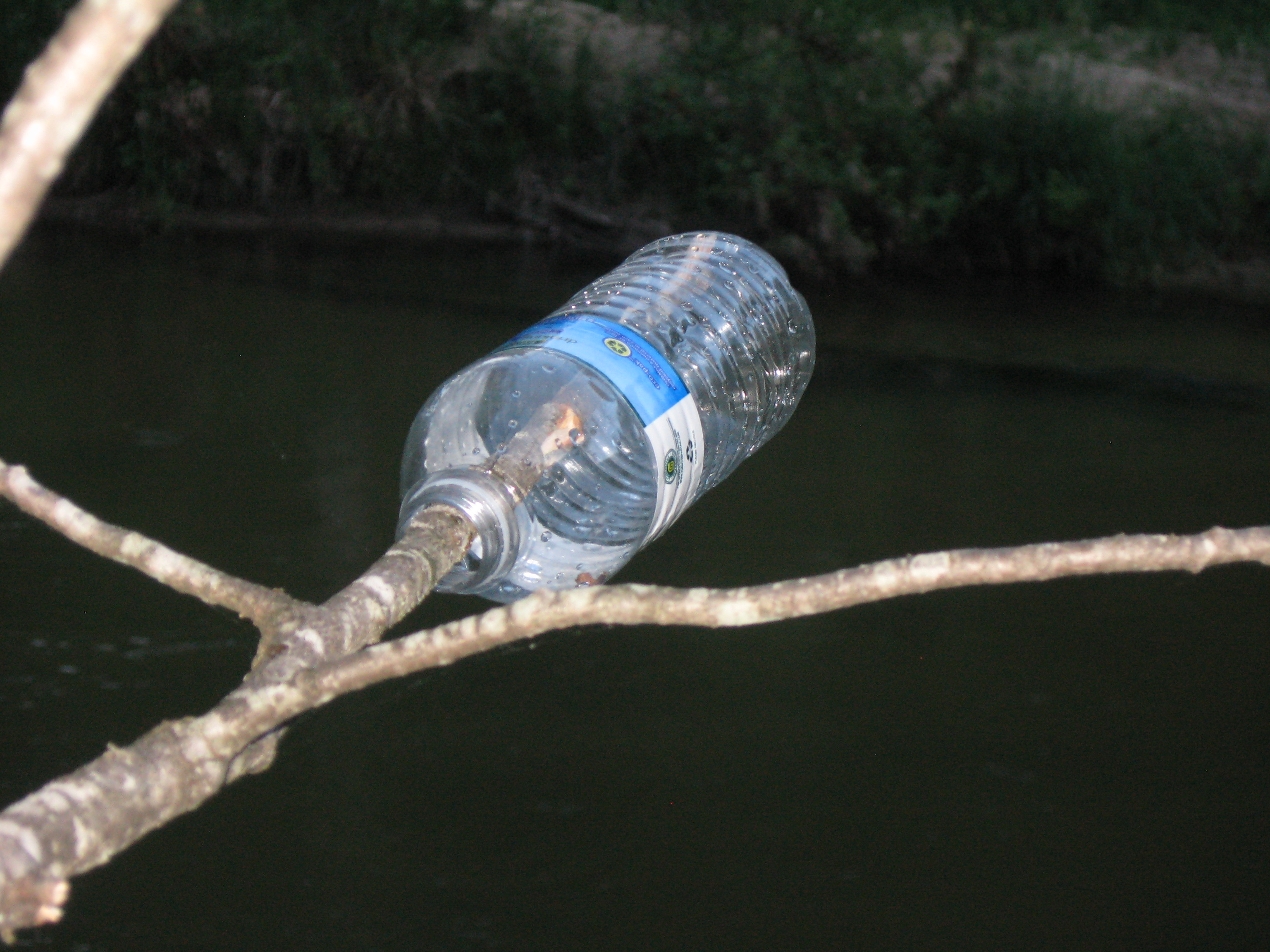 A bottle hanging from a tree marking one of the safe places to cross the river