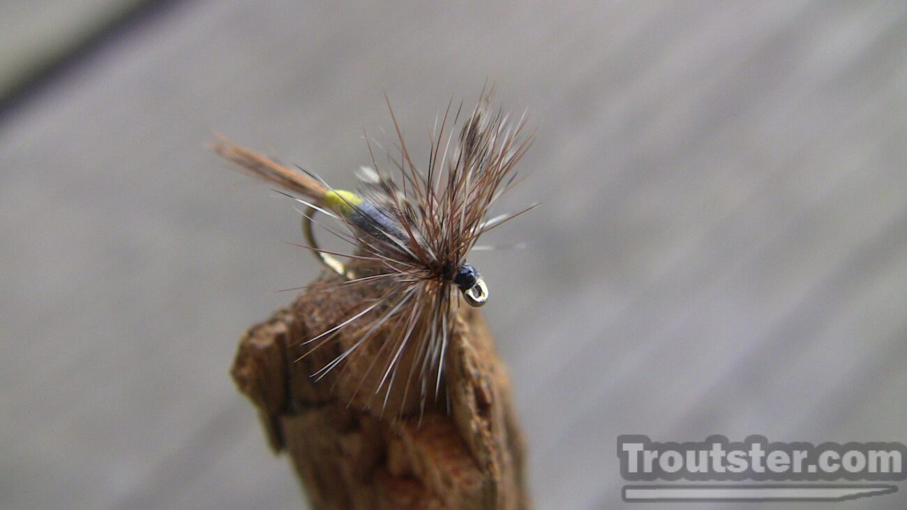 Top view of the female adams dry fly