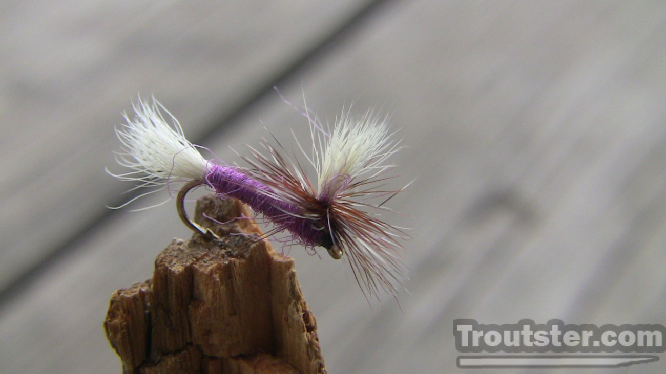 The purple haze fly tied with purple dubbing and calf hair parachute