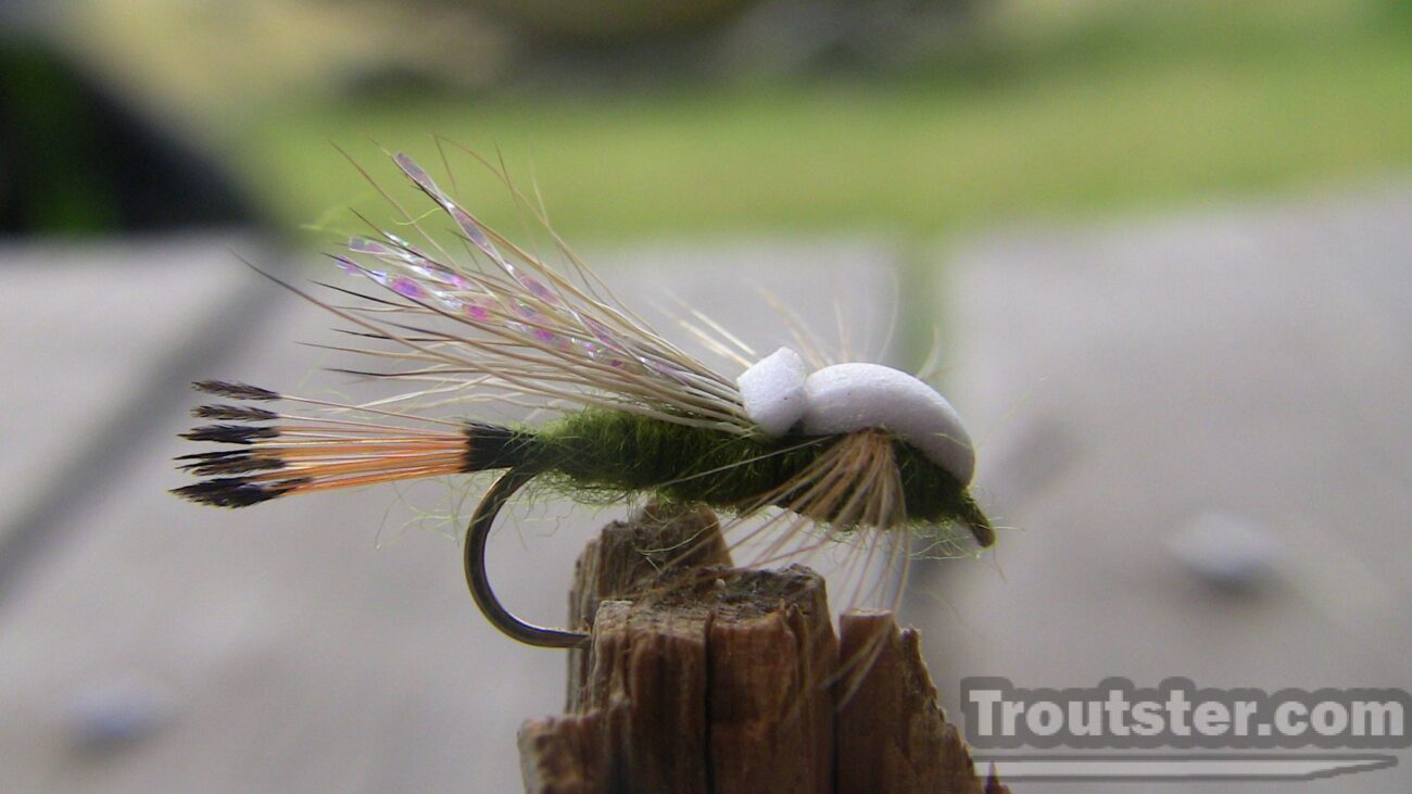 An olive outrigger caddis trout fly pattern. Foam top and golden pheasant feather tail.