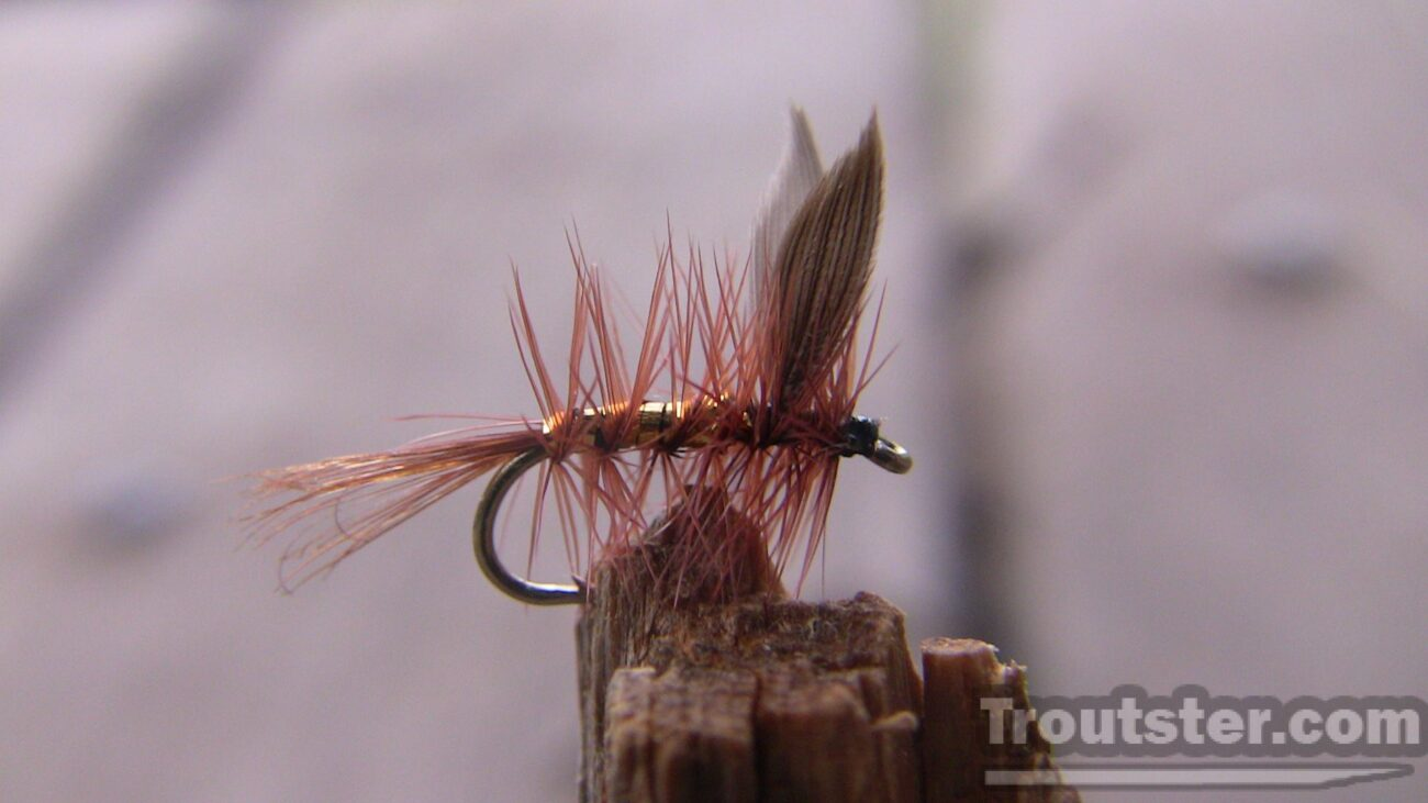 Wickhams fancy fly. Tied using brown  hackle, gold ribbing and duck wing feathers.
