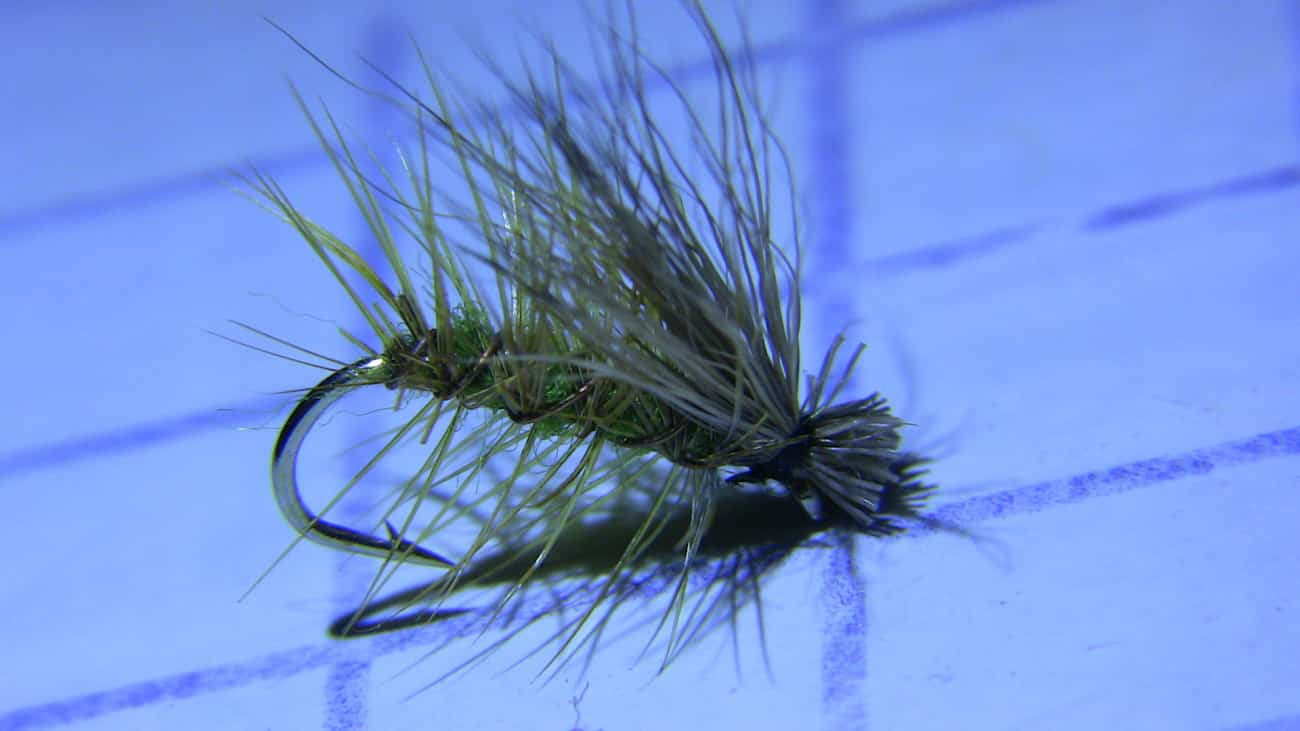 A green elk hair caddis trout fly.