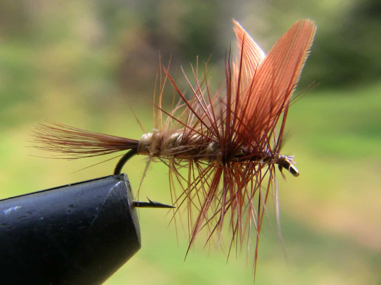 A closeup image of the male beaverkill pattern.