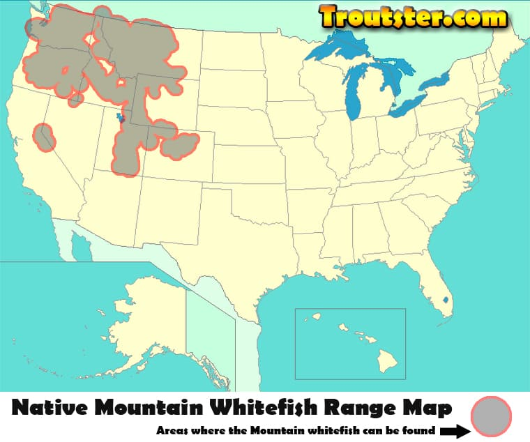 Mountain whitefish range map