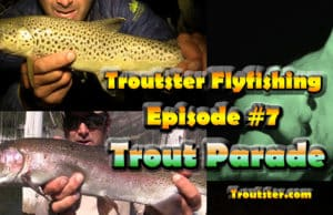 Trout fishing in Montana and Idaho - dry fly fishing action
