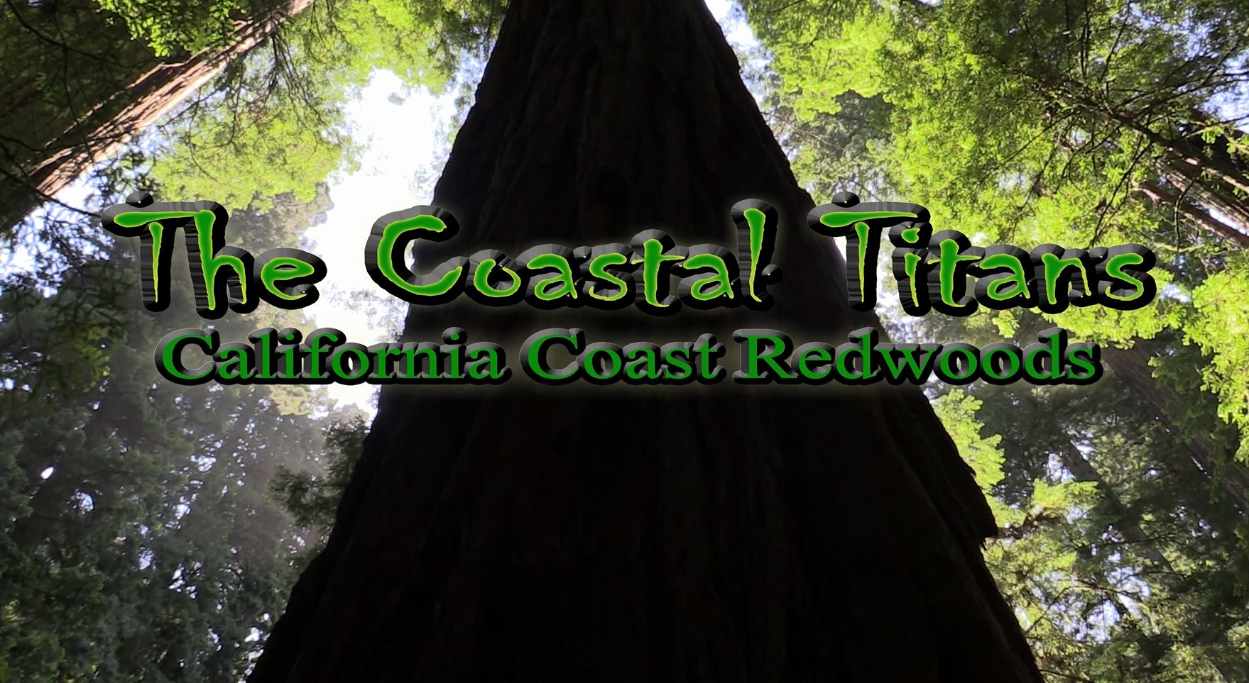 Redwood Forest Documentary