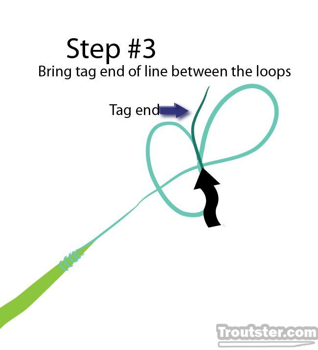 Step 3 for tying perfection loop knot