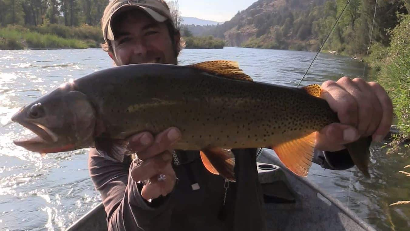 big cutbow trout caught in the Snake river in Idaho