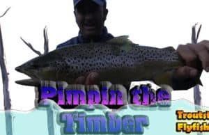 fly fishing in mt lakes for huge trout