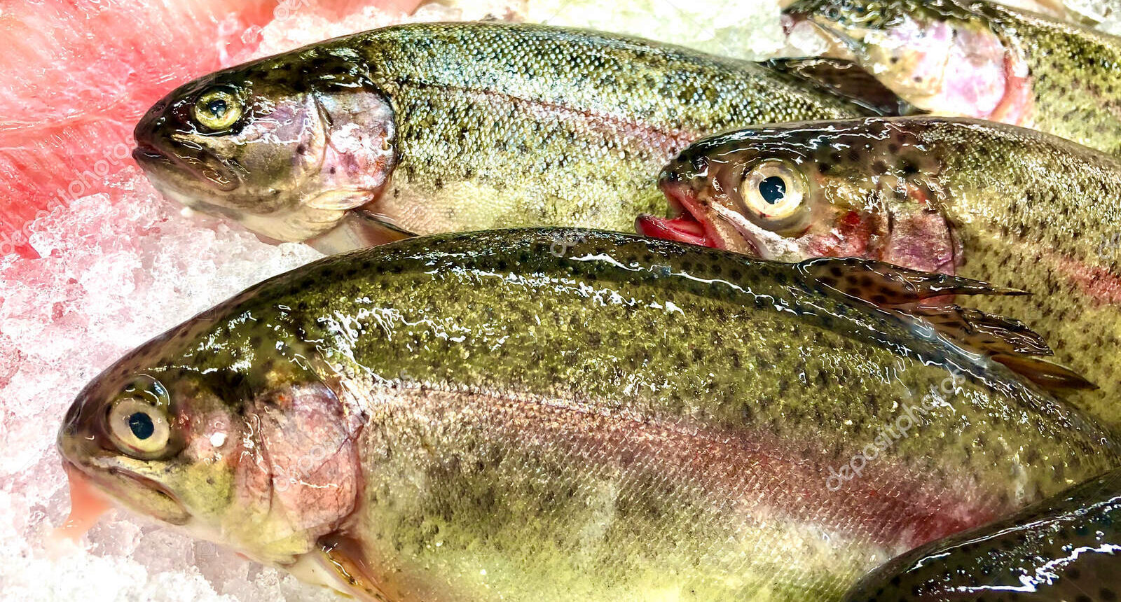 how to clean rainbow trout 2021, how to clean and cook rainbow trout, how to filet rainbow trout, how to kill rainbow trout, how to gut rainbow trout