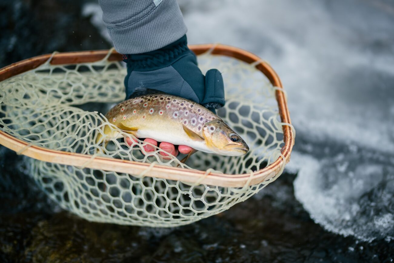 how to clean trout 2021, how to gut trout, how to descale trout, best way to clean trout, how to clean trout fish