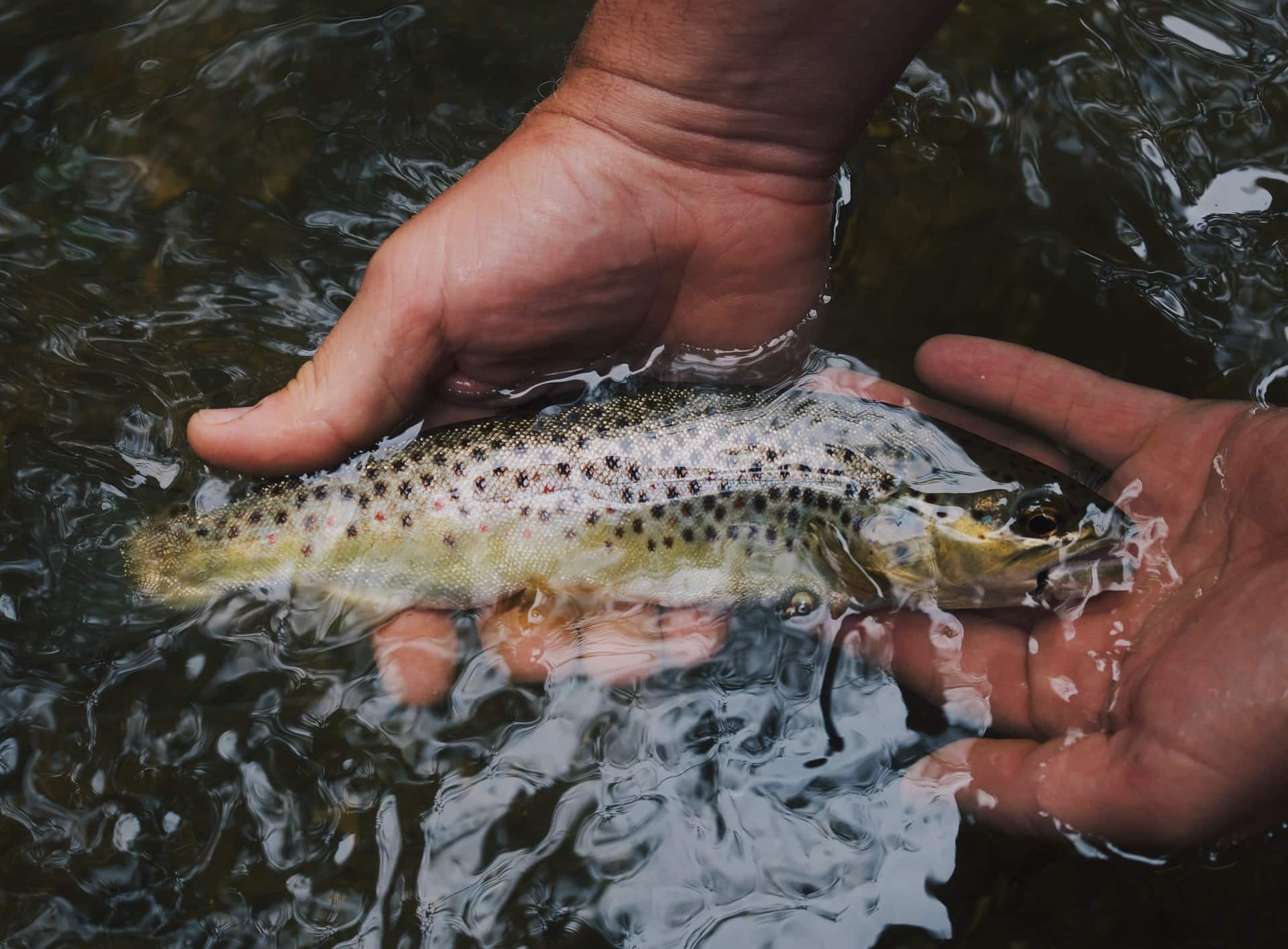 how to hold a trout, holding a trout, handling a trout, how to hold a trout fish for a picture