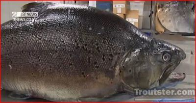 new zealand world record brown trout, biggest trout ever caught, the current and past world record brown trout, the biggest trout in the world